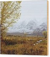 Autumn In Lone Pine Wood Print