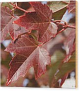Autumn In My Back Yard Wood Print