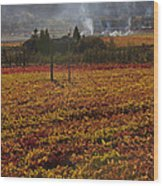 Autumn In Napa Valley Wood Print