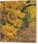 Autumn In Tennessee Wood Print