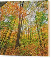 Autumn In The Hocking Hills Wood Print