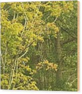 Autumn Is Here Wood Print