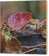 Autumn Ivy In Red Wood Print