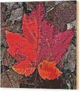 Autumn Leaf Art Iv Wood Print