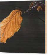 Autumn Leaf Wood Print by Frits Selier
