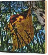 Autumn Leaf In The Pine Needles Wood Print