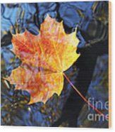 Autumn Leaf On The Water Level Wood Print