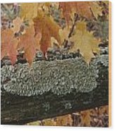 Autumn Leaves And A Lichen-covered Log Wood Print