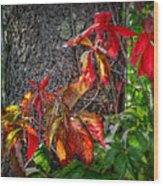 Autumn Leaves High On The Tree Trunk Wood Print
