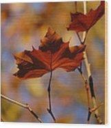 Autumn Leaves II Wood Print