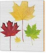 Autumn Leaves Isolated Wood Print