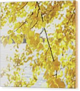 Autumn Leaves On Branch With Lake In Background, Close-up Wood Print