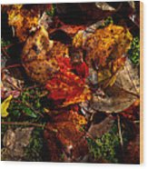 Autumn Leaves On The Moss Wood Print