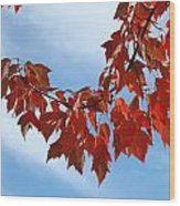 Autumn Leaves Tree Red Orange Art Prints Blue Sky White Clouds Wood Print