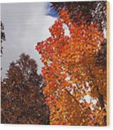 Autumn Looking Up Wood Print