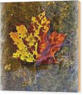 Autumn Maple Leaf In Water Wood Print