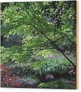 Autumn Maples Wood Print
