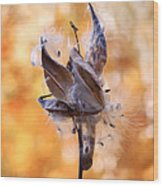 Autumn Milkweeds Wood Print