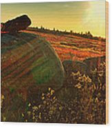 Autumn Morn In The Berry Field Wood Print