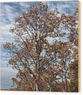 Autumn Oaks White Clouds Wood Print