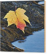 Autumn On The Tellico River - D004558 Wood Print