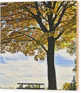 Autumn Park Wood Print by Elena Elisseeva