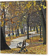 Autumn Park In Toronto Wood Print by Elena Elisseeva