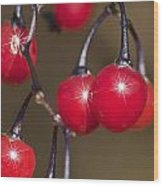 Autumn Red Berry Sparkle Wood Print