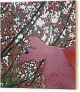 Autumn Red Maple Tree Wood Print