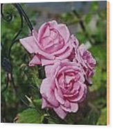 Autumn Roses Wood Print