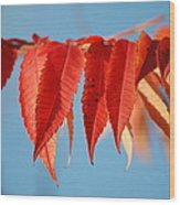 Autumn Scarlet Wood Print