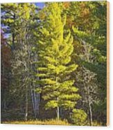 Autumn Scene Of Colorful Trees On The Little Manistee River In Michigan No. 0855 Wood Print