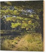 Autumn Scene Of The Little Manistee River In Michigan No. 0882 Wood Print