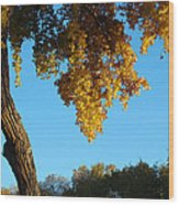 Autumn Shadows_rio Grande Blvd_albuquerque_nm Wood Print