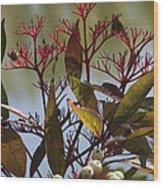 Autumn Snow Berry Bush Wood Print