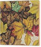 Autumn Splendor Wood Print by JQ Licensing