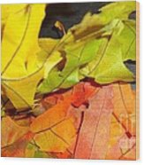 Autumn Spotlight Wood Print