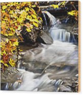 Autumn Stream No 3 Wood Print