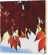 Autumn Sun Glory Wood Print