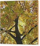 Autumn Sun Wood Print by Karen Grist