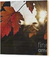Autumn Sunburst Wood Print