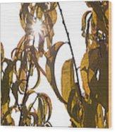 Autumn Sunburst Wood Print