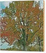 Autumn Sweetgum Tree Wood Print