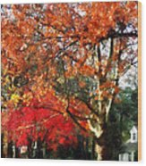Autumn Sycamore Tree Wood Print