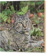 Autumn Tabby Cat #2 Wood Print