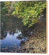 Autumn Tree Colors In Central Park In New York City Wood Print
