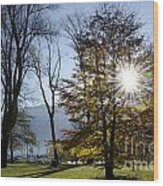 Autumn Tree In Backlight Wood Print