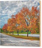 Autumn Trees At Busch Wood Print