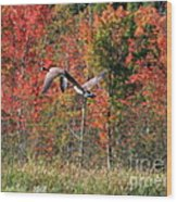 Autumn Vermont Geese And Color Wood Print