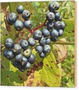 Autumn Viburnum Berries Series #3 Wood Print